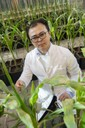 Amid young Maize plants: