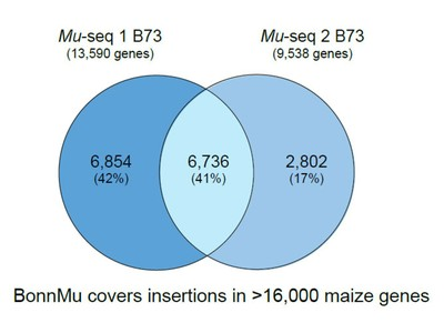 covers insertions in >16,000 maize genes